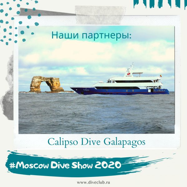 Calipso Dive Galapagos